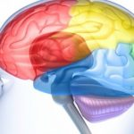 Aging in Brain Reversed With Protein Therapy