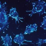 Researchers Discover Key To Aging Immune System