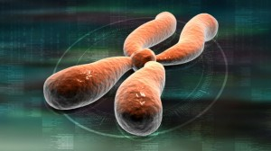 rp_chromosones-300x168.jpg