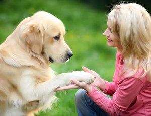 rp_pet-dog-300x230.jpg
