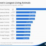 The longest-lived animals on Earth, in one chart