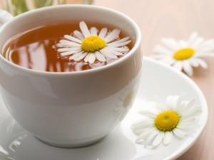 chamomille-tea