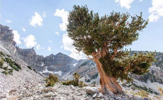 The oldest living thing on Earth