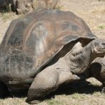 Turtles could hold the secret to human immortality
