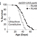 Boosting Single Gene Found to Increase Maximum Lifespan 28%