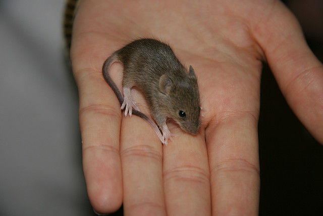 In Anti-Aging Breakthroughs, Scientists Reverse Aging in Mice, Worms