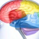8 Nutrients That Prevent Brain Aging