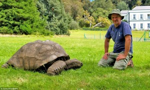 World's oldest living animal, Jonathan the Tortoise