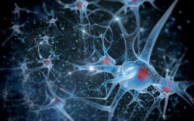 Brain Region Found to Control Aging