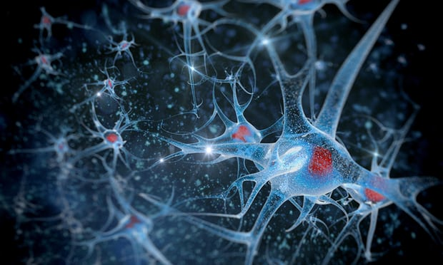 Brain Region Found to Control Aging